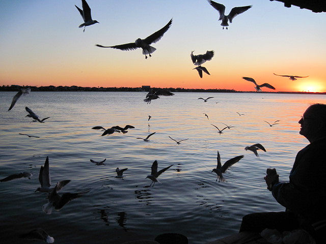 Guest feeding gulls